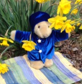 Edelweiss the Bear